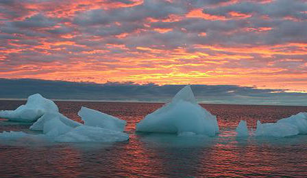 Icebergs floating in the sea